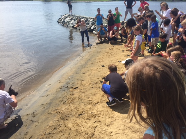 Students Release Terrapins into the Bay